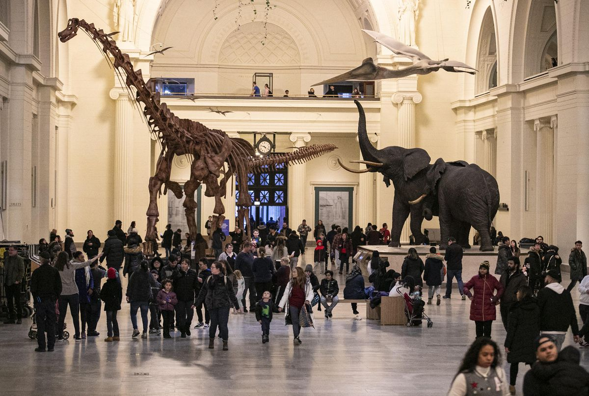 Crowds in a natural history museum's rotunda walk around a towering dinosaur skeleton and life-size models of elephants.