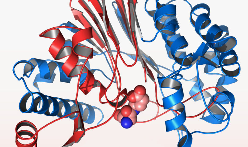 Proteins rapidly form complicated structures which had proven difficult to predict.