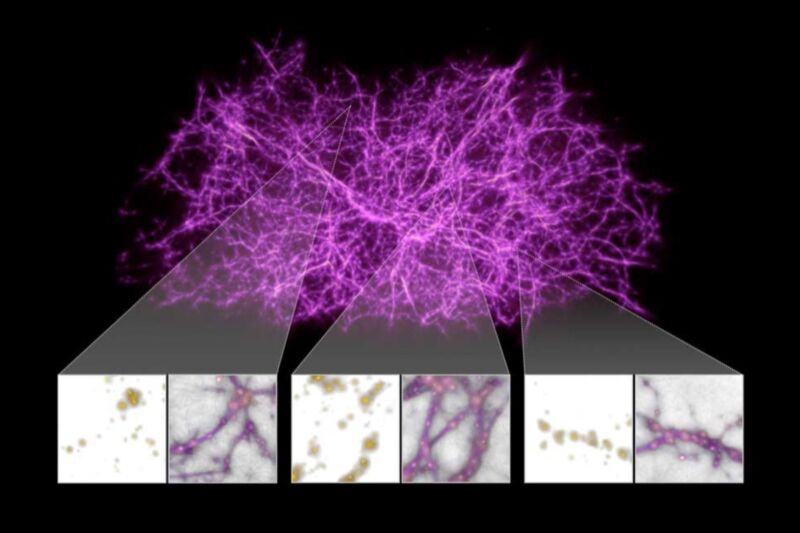 A reconstruction of the cosmic web— a vast network of filamentary structures of matter spanning the universe—modeled on  the growth patterns of slime mold.
